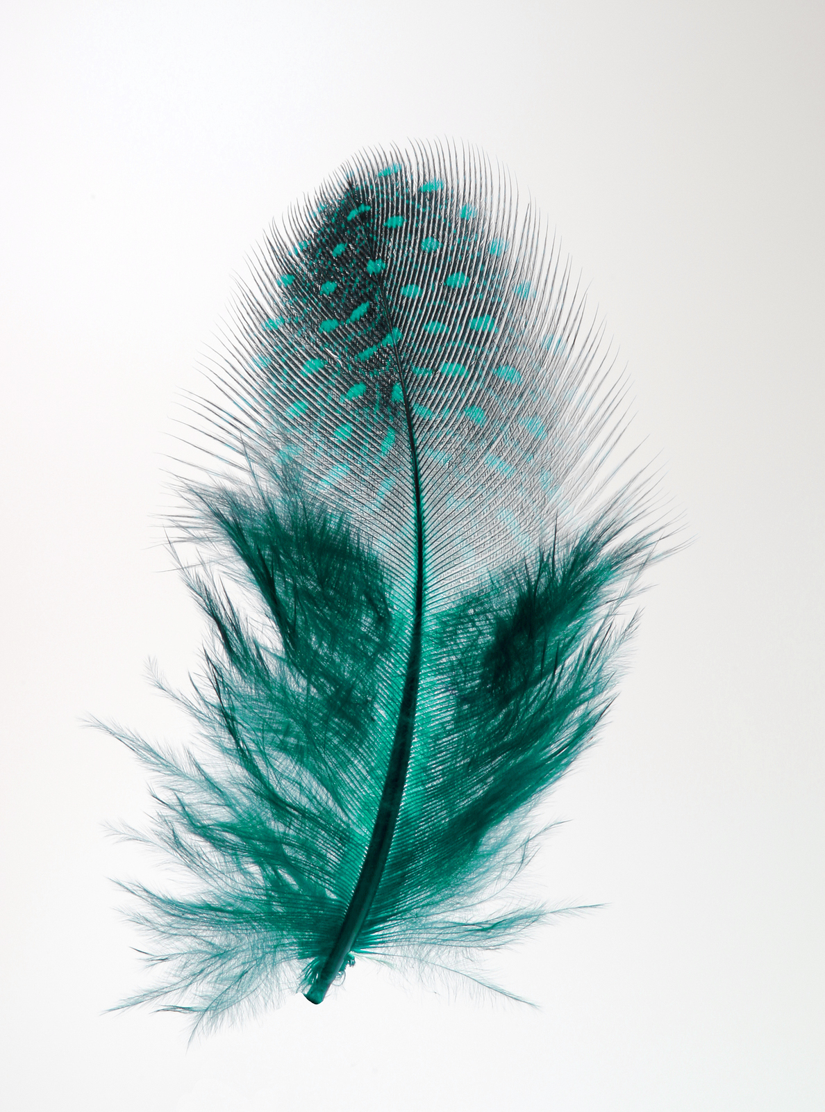 Teal feather image
