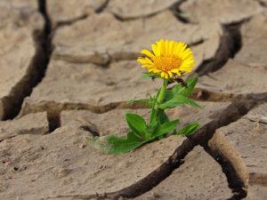 flower in dry cracked mud